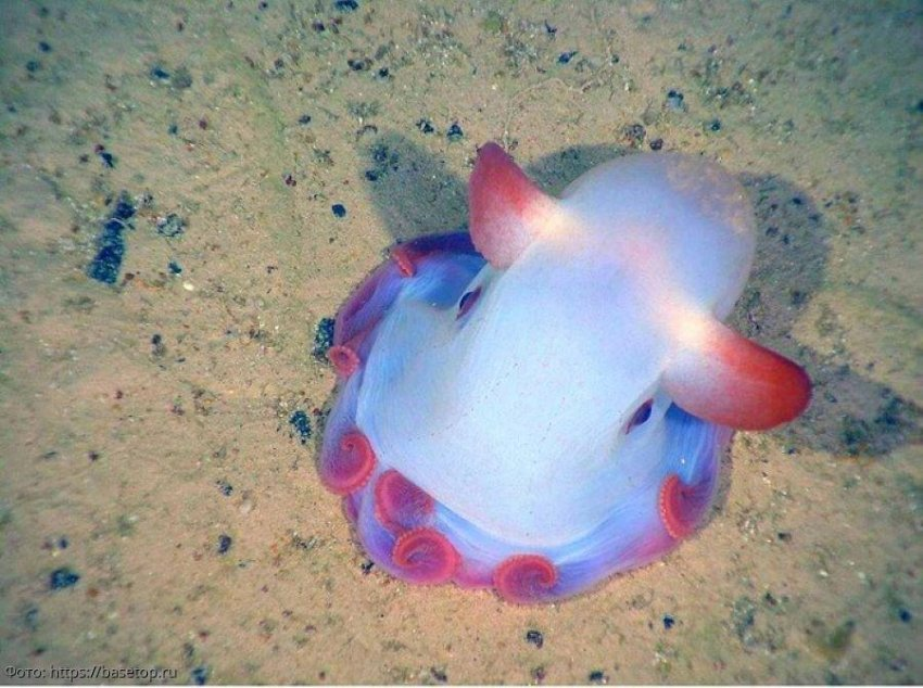 Фото самых необычных животных, населяющих Землю, о существовании которых вы даже не подозревали