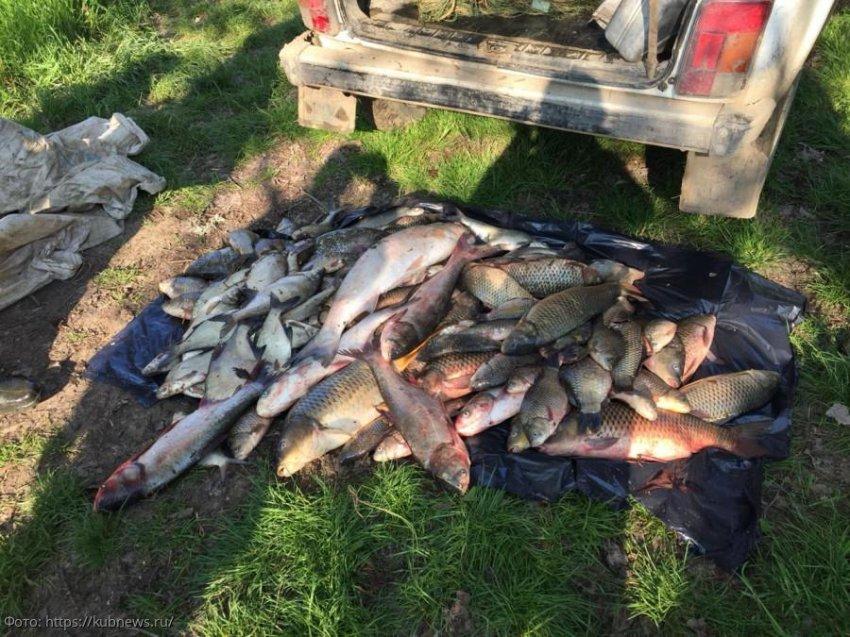 В законную силу вступил приговор Щербиновского районного суда в отношении жителей Краснодарского края за браконьерство