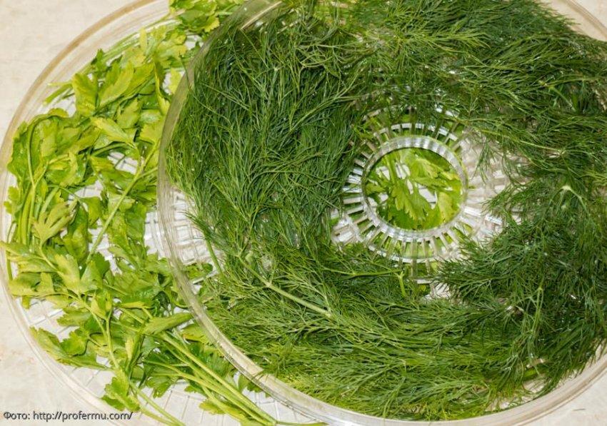 Как сушить зелень
