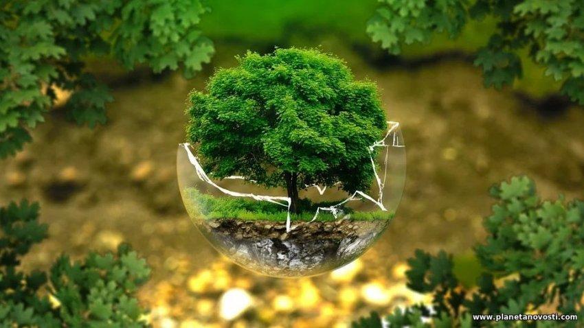 Ученые выяснили, почему некоторые деревья живут тысячи лет