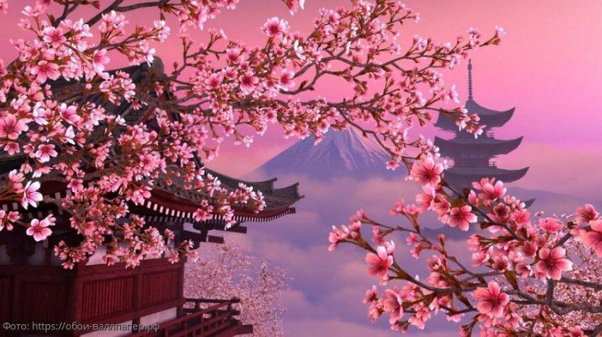 Посмотреть цветение Сакуры – причина поездки в Японию весной