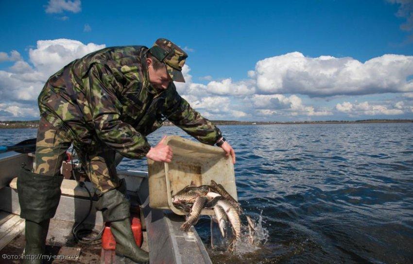 ФСБ России по Краснодарскому краю предотвратило ущерб водным биоресурсам РФ на сумму ₽239,8 тысячи