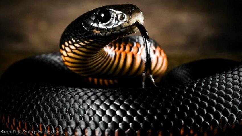Змеи могут быть первоначальным источником вспышки коронавируса в Китае