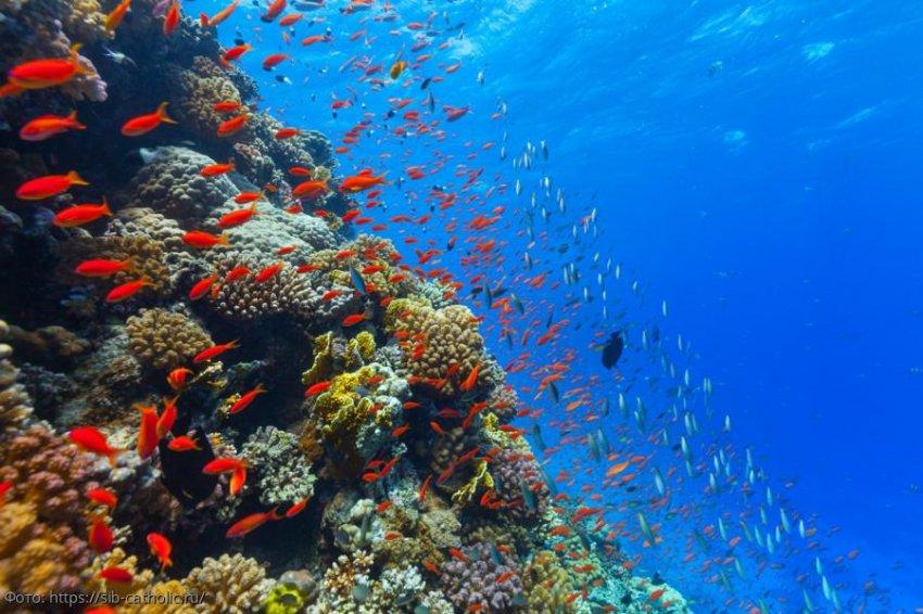 Голубое ускорение: наш рывок к океанским ресурсам отражает то, что мы уже сделали с сушей