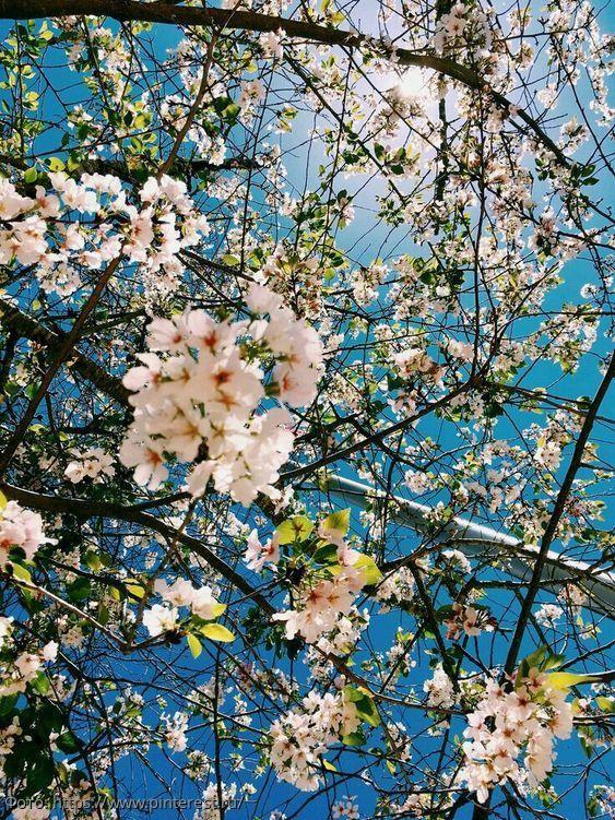 Весенняя сказка: какие знаки зодиака весной смогут воплотить в жизнь свои идеи и мечты