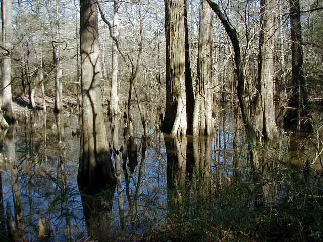 Четыре аномальных лесных зоны, где часто видят НЛО, йети и других чудовищ