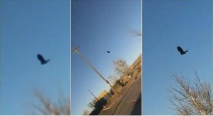 Глюк в Матрице с застывшей в воздухе вороной заснят в Нью-Мексико | Паранормальные новости