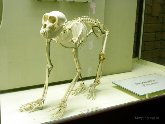 Останки непонятного животного нашли рядом с островом, на котором живут лабораторные обезьяны   Паранормальные новости