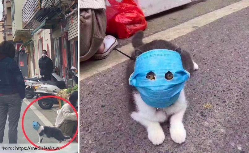 В Китае нашелся пушистый борец с коронавирусом