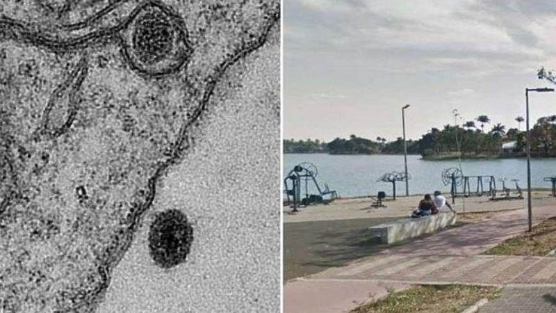 В бразильском озере нашли вирус, который ученые не могут идентифицировать