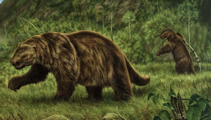 Всего 60 лет назад в штате Нью-Йорк видели огромных вымерших ленивцев   Паранормальные новости