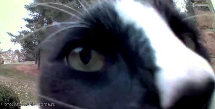9 фотографий котов, которые точно знают, что этот мир создан для них любимых