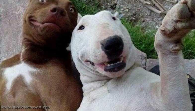 Фото смешных собак, несущие позитив и хорошее настроение