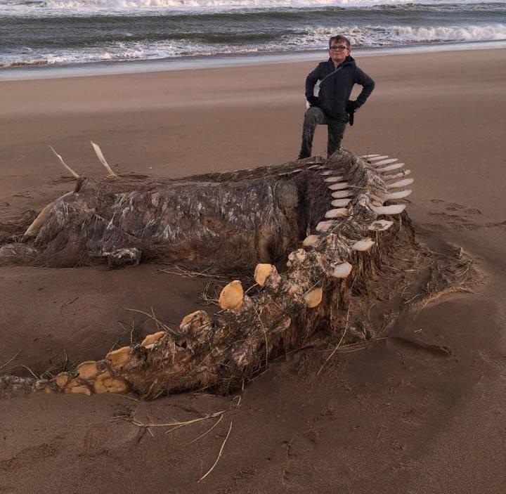 «Это Несси?». На берег Шотландии выбросило непонятный скелет | Паранормальные новости