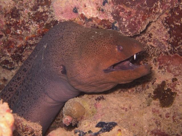 На берег Мексики выбросило странного и безглазого угря-дельфина | Паранормальные новости