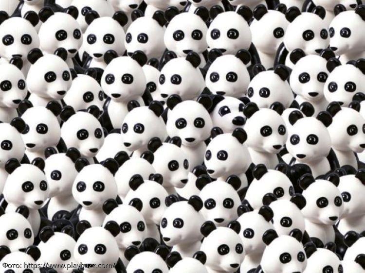 Разминка для мозгов: найдите среди панд спрятавшегося щенка