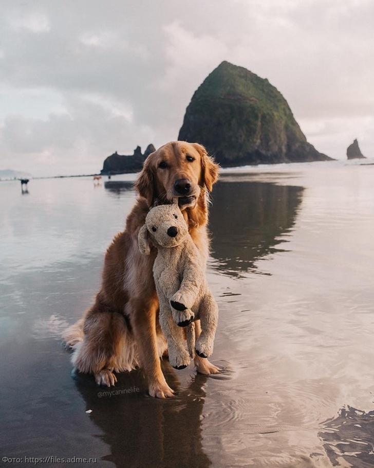 10 фотографий, на которых собаки выглядят так мило, что их даже могут полюбить заядлые котолюбы