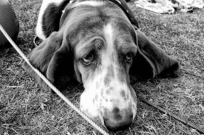 10 фотографий собак, у которых просто не заладился день