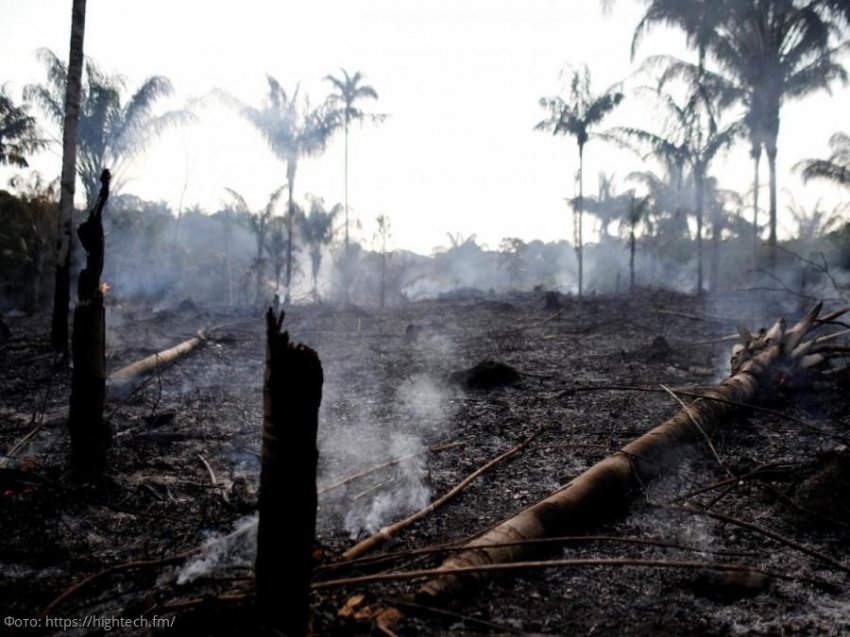 Амазонские деревья пишут автобиографии, сохраняя человеческую историю в своем лесу