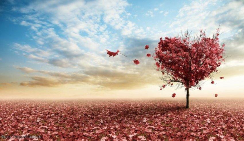 Как признаться в любви Ракам, Львам и Девам в 2020 году
