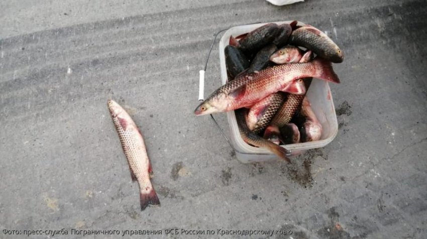 В Анапе пресечен факт транспортировки незаконно добытых водных биологических ресурсов