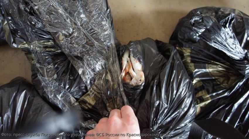 Сотрудниками ПУ ФСБ России по Краснодарскому краю выявлен факт незаконного провоза партии сырой рыбы «Барабуля»