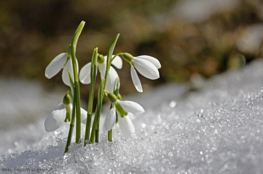 Володина назвала 3 знака зодиака, для представителей которых весна станет сплошной белой полосой