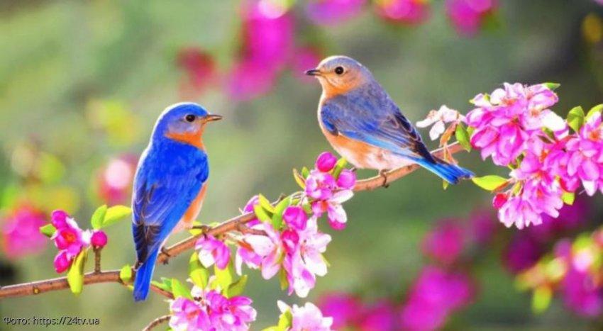 Как удачно встретить весну Овнам, Тельцам и Близнецам