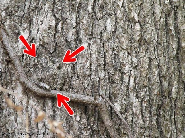 Тест на внимательность: найдите на картинке спрятавшуюся жабу