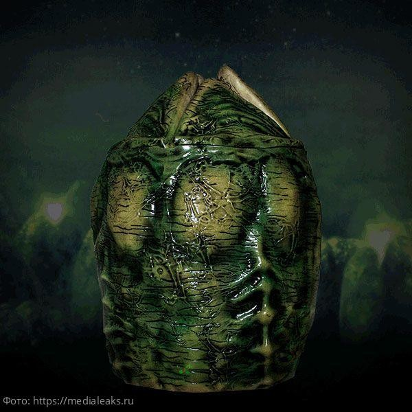 Люди увидели, как растет китайская капуста. И это похоже яйца Чужих