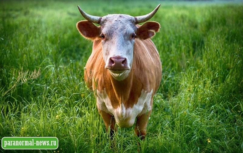 Говорящая корова, гигантские звери и двойник: Странные истории от жителя глубинки Канады