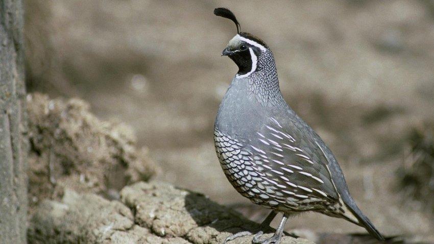 На Филиппинах зафиксирована вспышка птичьего гриппа