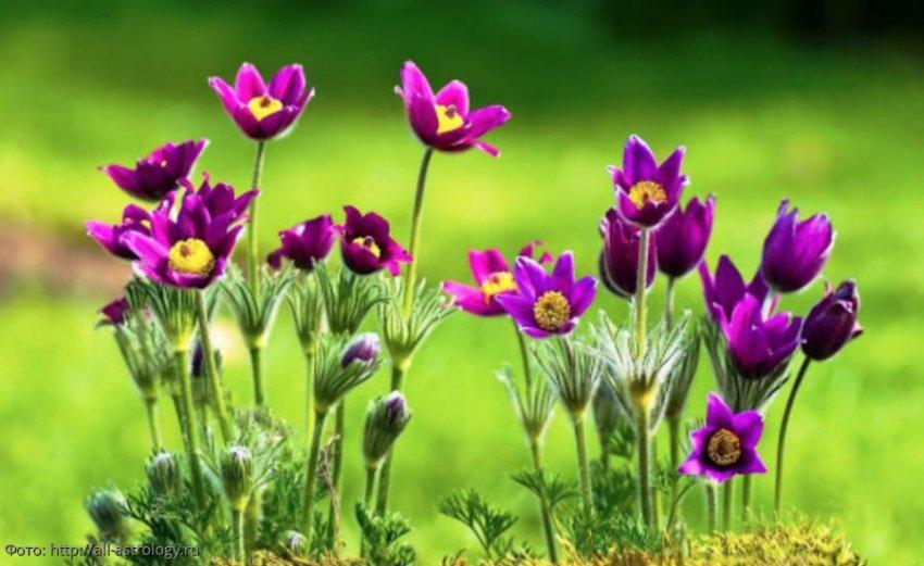 Как удачно встретить апрель Ракам, Львам и Девам