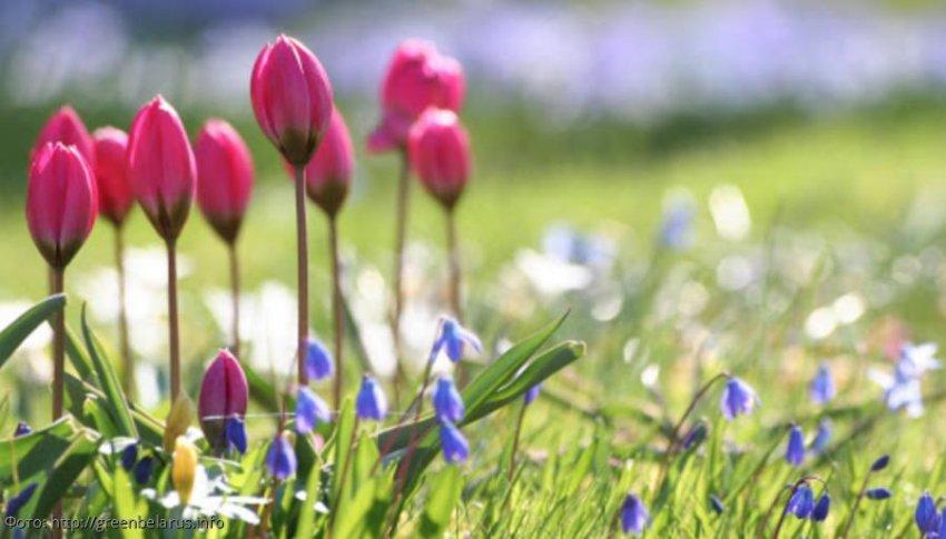 Как удачно встретить апрель Овнам, Тельцам и Близнецам