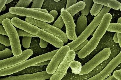 Пандемия коронавируса может вызвать распространение супербактерий