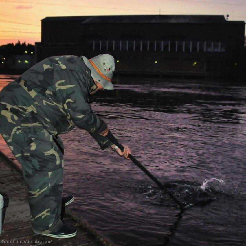 Сотрудники ПУ ФСБ России по Краснодарскому краю выявили 5 человек, осуществлявших рыболовство запрещённым способом