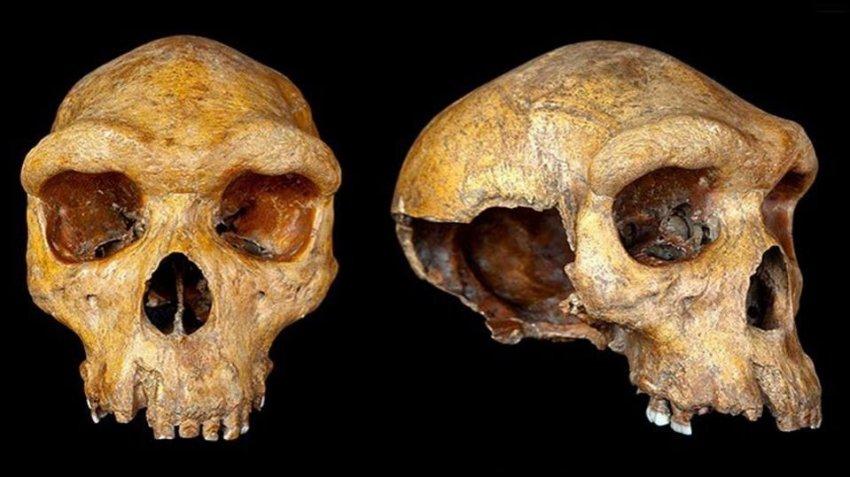 Ученые выяснили возраст Родезийского человека, обнаруженного в Африке столетие назад