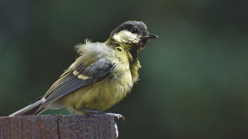 В Германии неизвестная болезнь убивает птиц