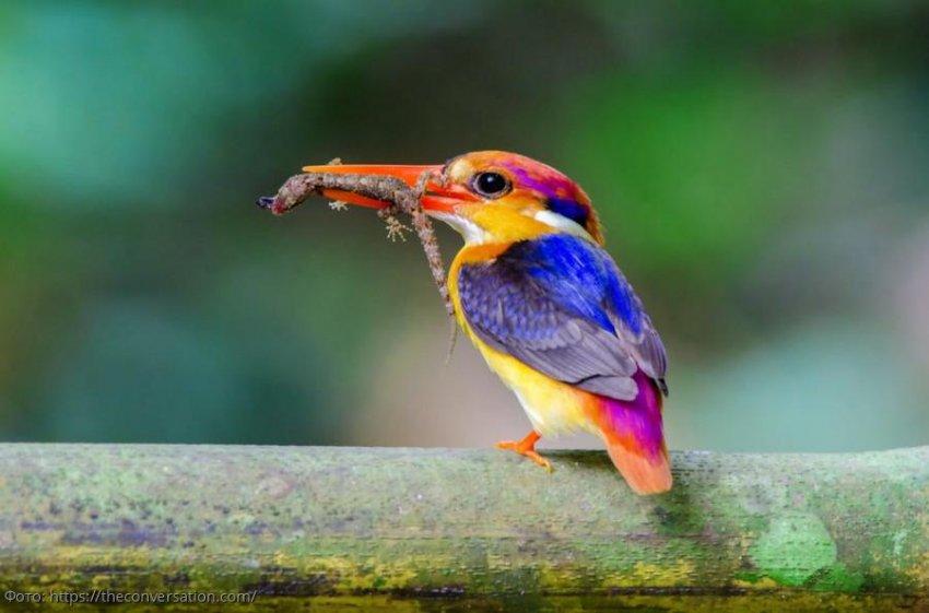 Изменение климата может привести к резким потерям биоразнообразия в этом столетии
