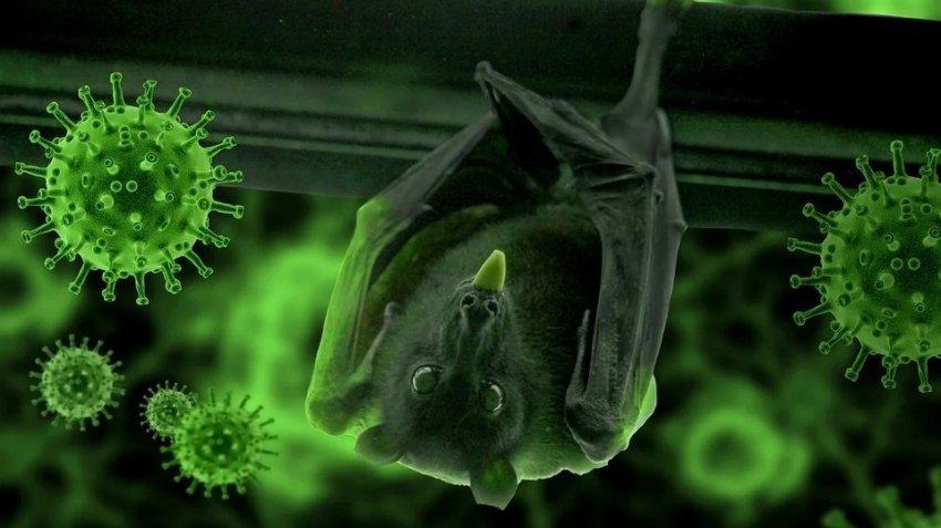 Летучие мыши здесь ни причем: ученые выяснили, кто передал человеку коронавирус