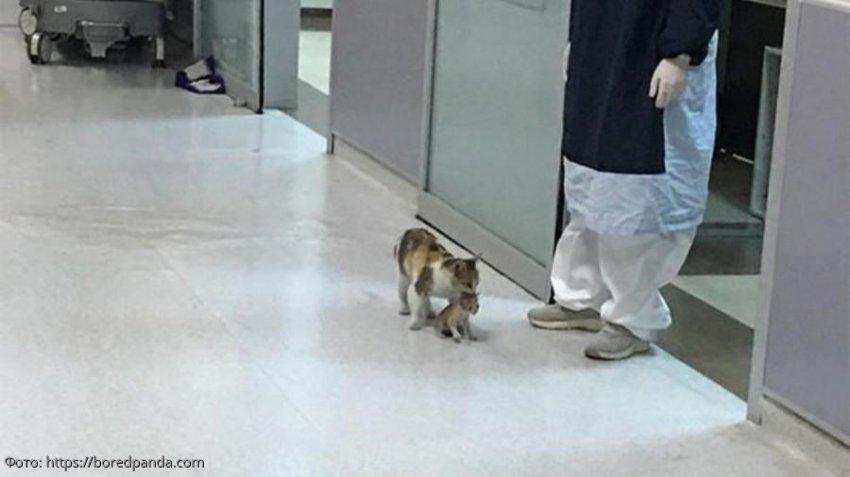 Кошка сама принесла больного котёнка в больницу и попросила о помощи