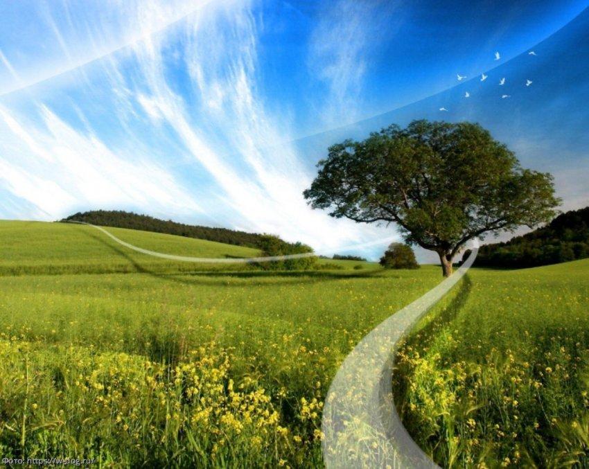 Экологические нормы могут стать первыми жертвами послепандемического восстановления