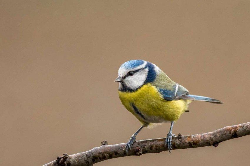 Болезни, переносимые пернатыми, или почему нужно поддерживать социальное дистанцирование вокруг кормушек для птиц