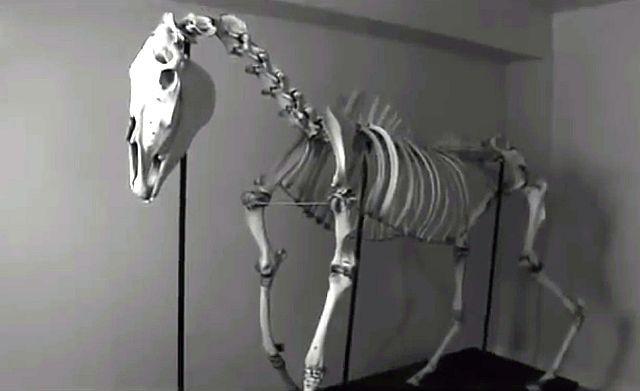 Зловещая тайна долины Сен-Луис: Кто изувечил и убил лошадь по кличке Леди? - Паранормальные новости