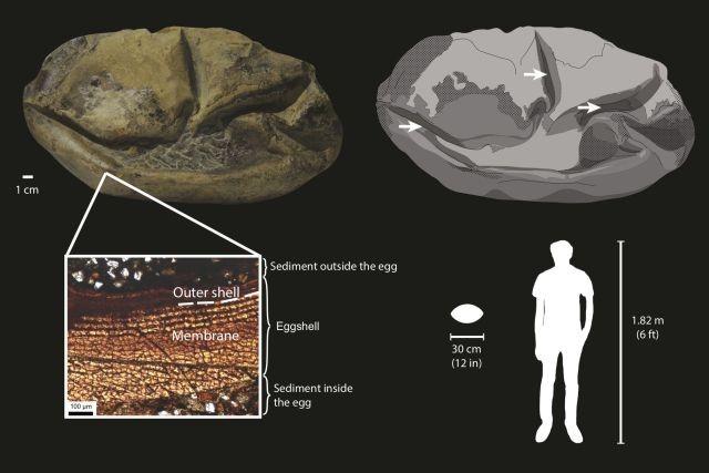 Найденную в Антарктиде странную окаменелость наконец опознали - Паранормальные новости