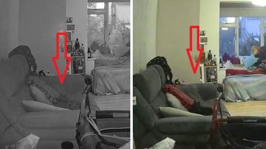 Умерший черный кот пришел к хозяйке и это запечатлела камера наблюдения - Паранормальные новости