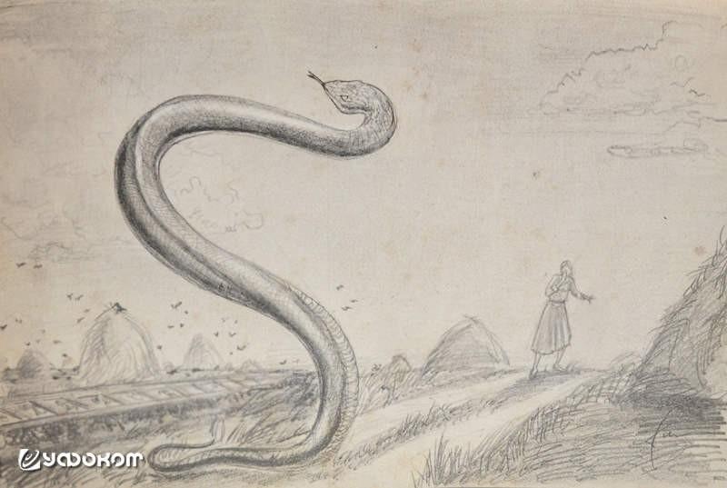 Жабий король и летающие змеи: Монстры белорусского Полесья - Паранормальные новости