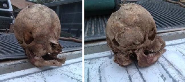Странный череп найден на ранчо в Техасе - Паранормальные новости