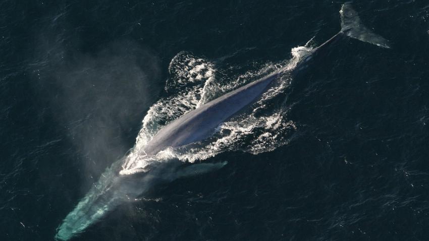 Тысячи видов животных направились к полюсам Земли: с чем связана массовая миграция