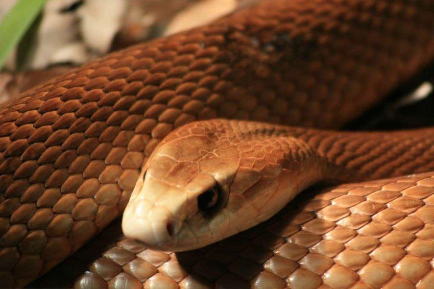 Любопытные дети: почему в Австралии живет так много опасных животных
